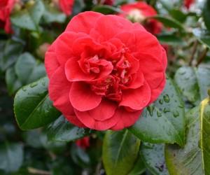 rozeparke
