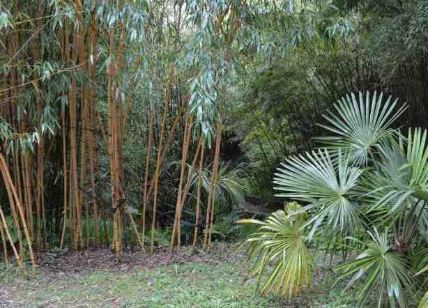 Bambukai33