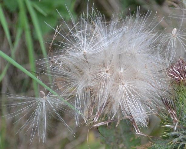 Hairy11
